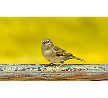 Just a Sparrow Photographic Print