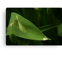 Crying plant Canvas Print