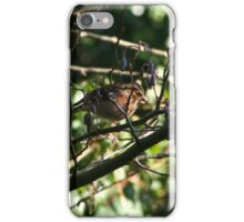 Hiding in the undergrowth iPhone Case/Skin