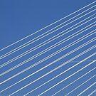Erasmus wires by Giuseppe Moscarda