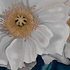 White Poppies by Kim Bender