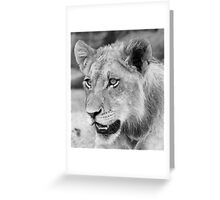 A georgous adolescent male cub!(Can rhinos hurt us mom?) Greeting Card