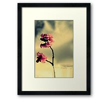 Pink Blossoms And Vase Framed Print