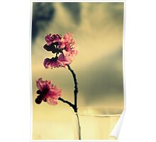 Pink Blossoms And Vase Poster