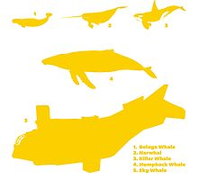 Whale Comparison Chart, NC Photographic Print