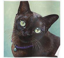 Black Burmese Cat Moose - Square Poster