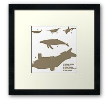 Whale Comparison Chart, NS Framed Print