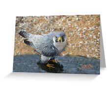 Beautiful Bird Playing in water Greeting Card