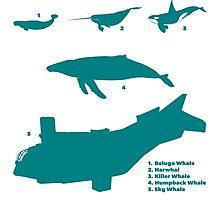 Whale Comparison Chart, VS Photographic Print