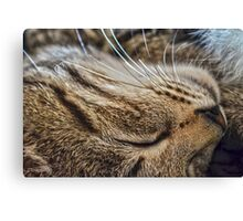 Dreaming of Mice (Amazing Challenge Entertainment) Canvas Print