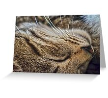 Dreaming of Mice (Amazing Challenge Entertainment) Greeting Card