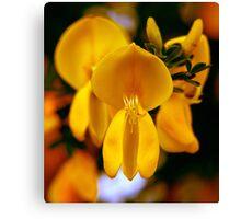 yellow wonder ... Canvas Print