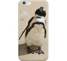 African Penguin at the Zoo iPhone Case/Skin