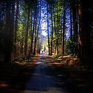Path thru the Forest by Stacy Colean