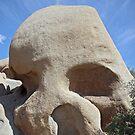 Skull Rock by Judson Joyce