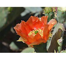 Cactus Flower Center Photographic Print
