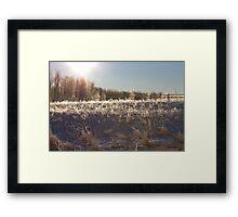 Chilly Framed Print