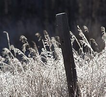 Fence Post by Kathi Arnell