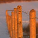 fenceline by Kathi Arnell