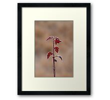 Straight Stalk Framed Print