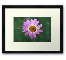 Wild Flower... Framed Print