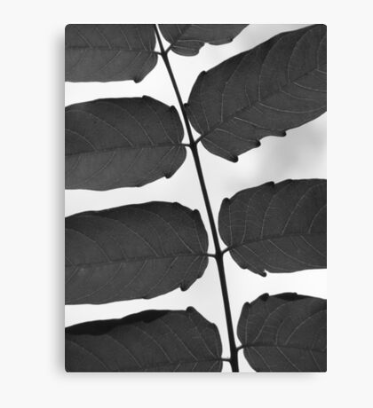 Leaves B &W Canvas Print