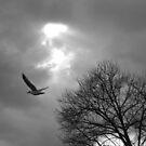 Flight B&W by elasita