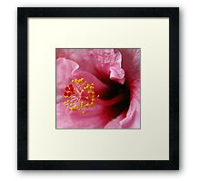Ever Wonder... Framed Print