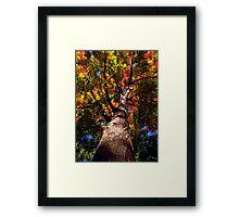 Fire Maple Framed Print