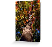 Fire Maple Greeting Card