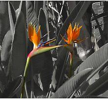 Paradise Flower by DavidGlez