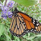 Feast for a Monarch by Monnie Ryan