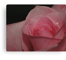 A Tearful Rose Canvas Print