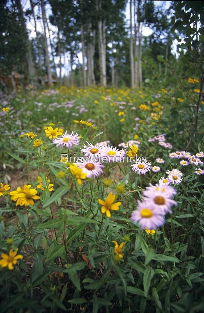 Wildflowers, Grand Mesa, Colorado by Brian Hendricks
