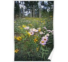 Wildflowers, Grand Mesa, Colorado Poster