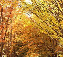 Gwynns Falls Parkway by elasita