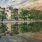 Buttermere Pines by Jonnyfez