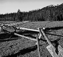 Split Rail Fence by David Lampkins