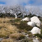 Bogong High Country Australia by johnrf