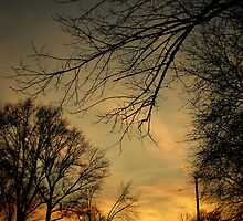 A Sunset Dark And Ominous by 1greenthumb