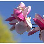 Magnolia by Kathi Arnell