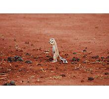 Ground Squirrel... Photographic Print