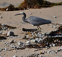 Bird, Werrong Beach, Australia 2014 by muz2142