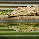 reptilian reflections by PeaceM
