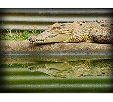 reptilian reflections Photographic Print