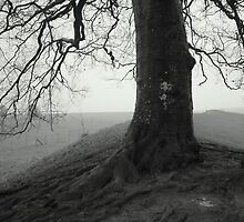 Avebury beeches by BlueCrow