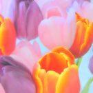 Tulip Dreams.. by Diane Arndt