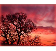 Love from the Sky Photographic Print