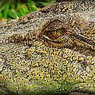 Crocodile eye by PeaceM