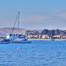 Sandy Bay Yachts by Mishka Góra